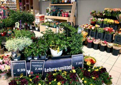 Pflanzen und Blumensträuße bei EDEKA Eder